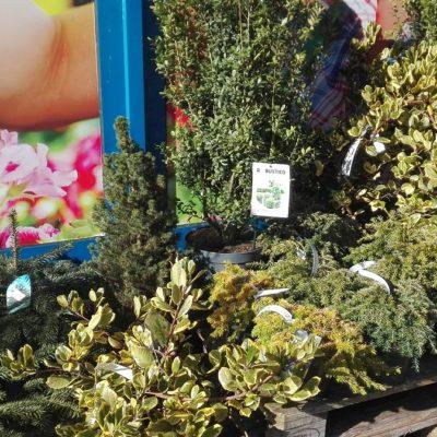 Pflanzen für den Außenbereich