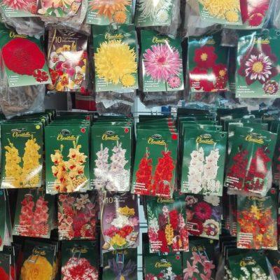Saatgut für Zierpflanzen und Blumen